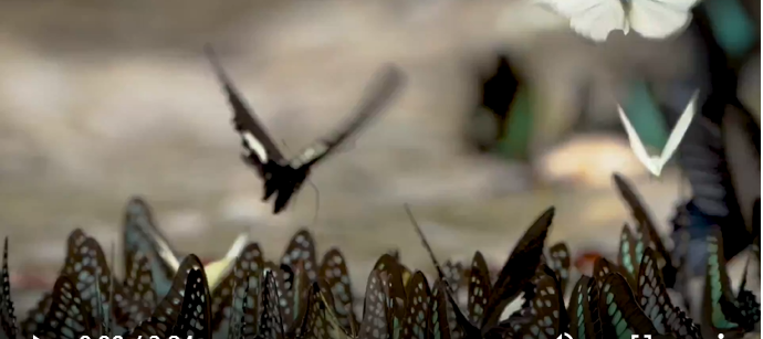 Discovering Mysteries E07: A Kaleidoscope of Butterflies