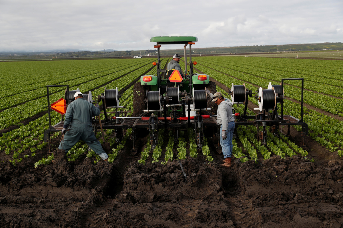Farm laborers reap misery as virus does its dirty work