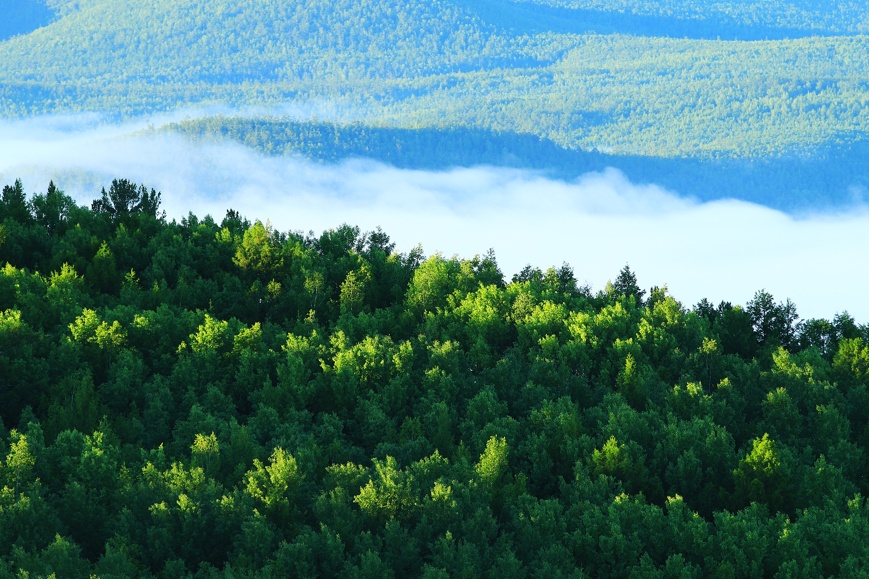 China's revised forest law to take effect in July