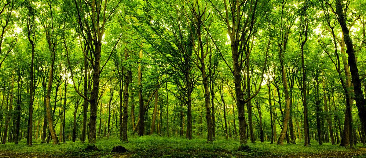 34 million hectares of farmland transformed to forest, grassland