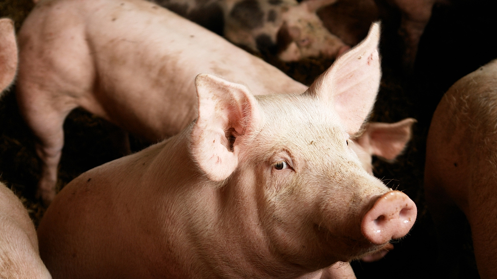 Chinese scientists identify a new flu virus that can jump from pigs to humans