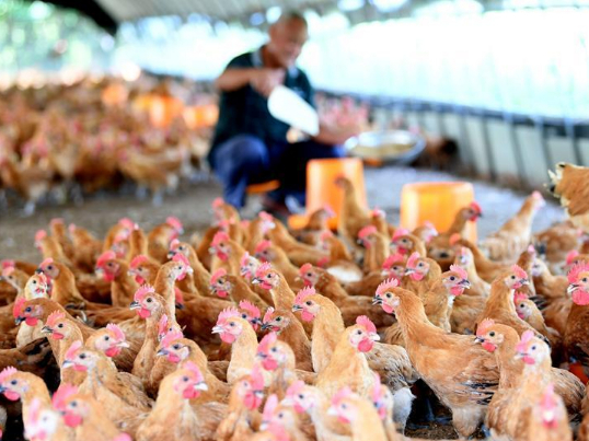China to close all live poultry markets gradually