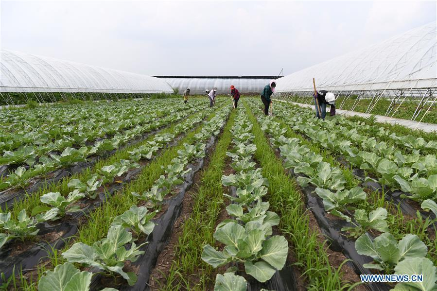 Vegetable and fruit base helps locals shake off poverty in Heilongjiang