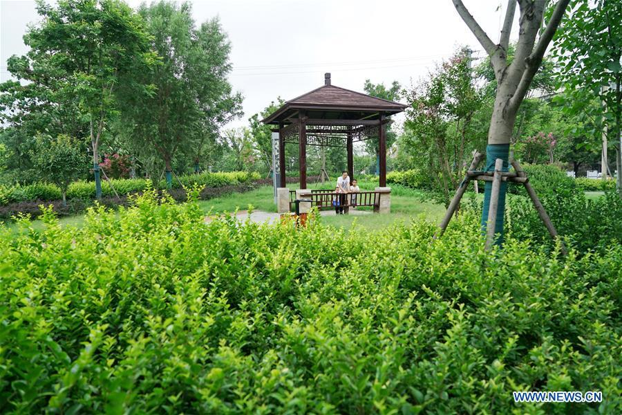 Shahe City of Hebei pushes forward urban green space construction