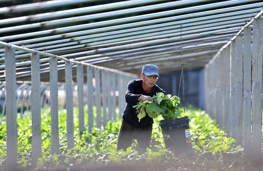 China's agricultural product wholesale prices edge up