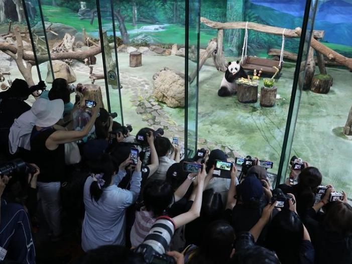 Giant panda celebrates 7th birthday in Taipei