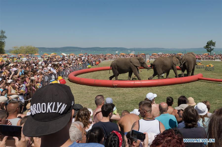 Elephants of Hungarian National Circus perform during promotional event