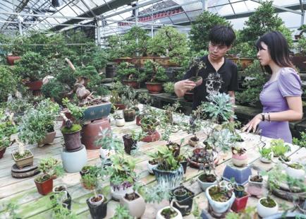 Money grows on trees for bonsai farmers in Jiangsu
