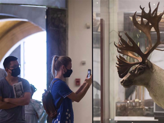 Royal Ontario Museum reopens to public
