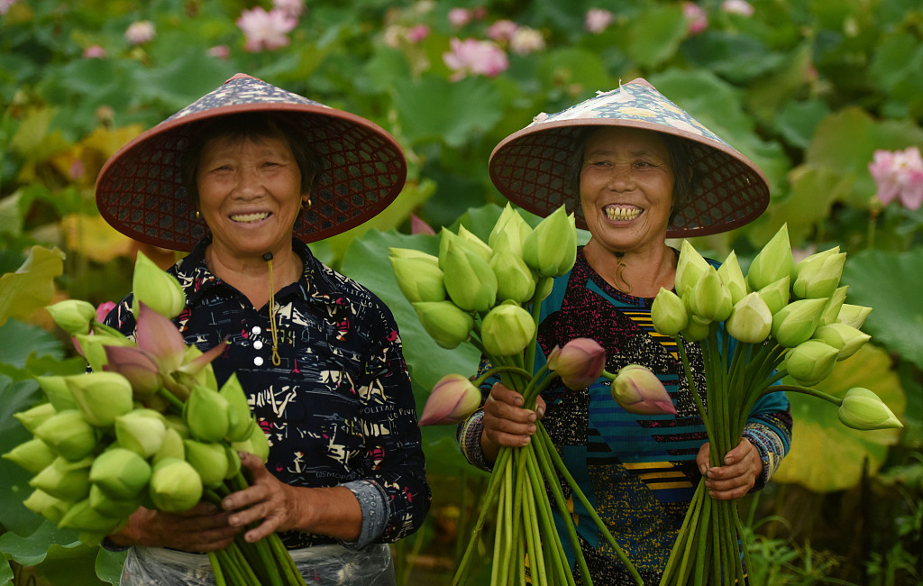 Lotus economy blossoms in Jinhua