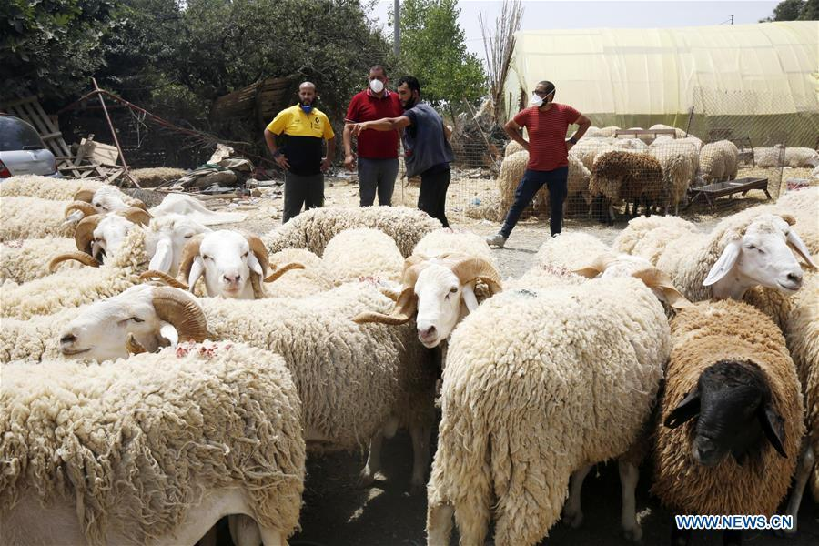 Animal stall ahead of Eid al-Adha in Algiers, Algeria