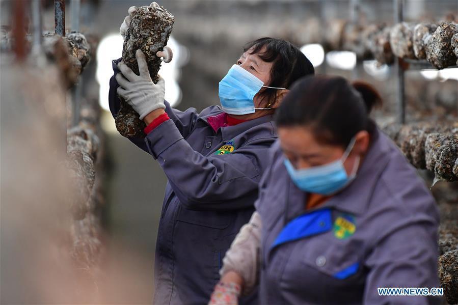 Gansu sees rising export of highland vegetables in H1