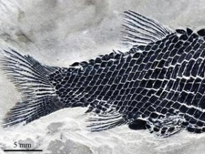 Fish fossils unearthed in SW China