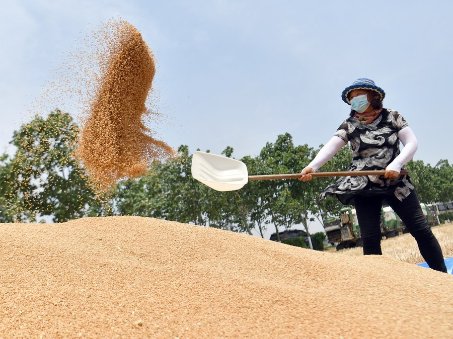 Summer output of grains hits record high