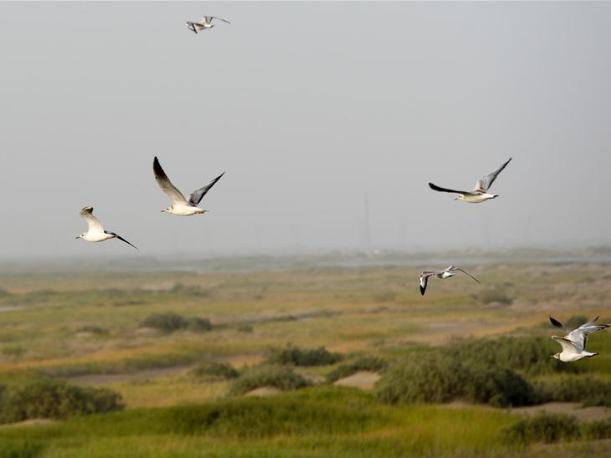 Taitema Lake in NE China's Xinjiang
