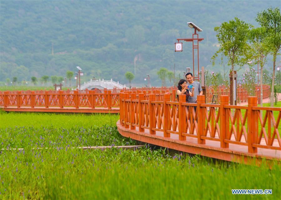 Ecological environment improved along Qingzhang River in Handan