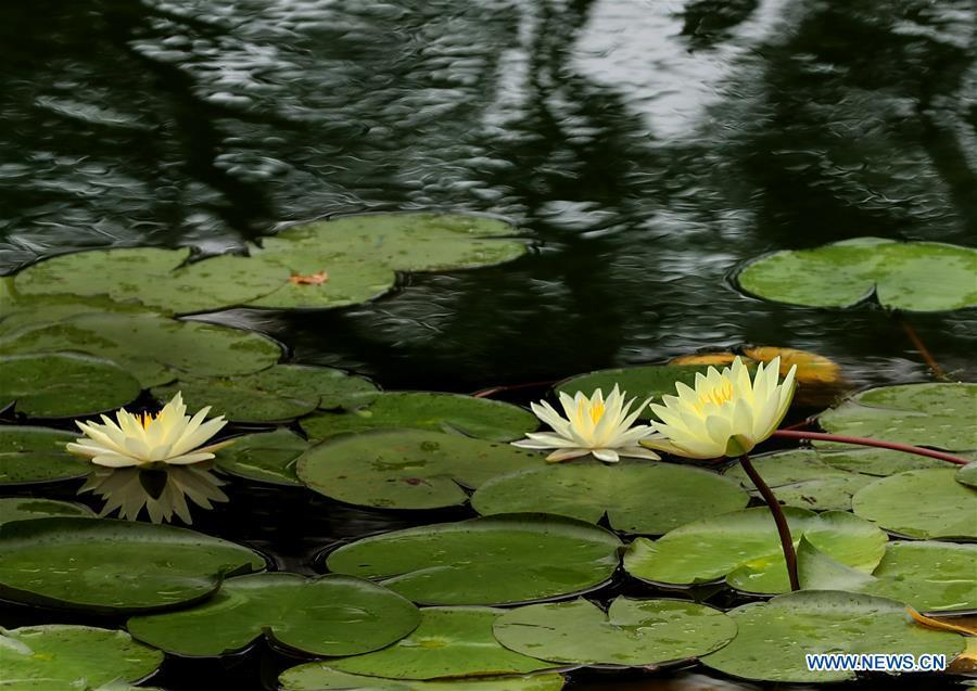 8th Shanghai lotus and water lily exhibition opens
