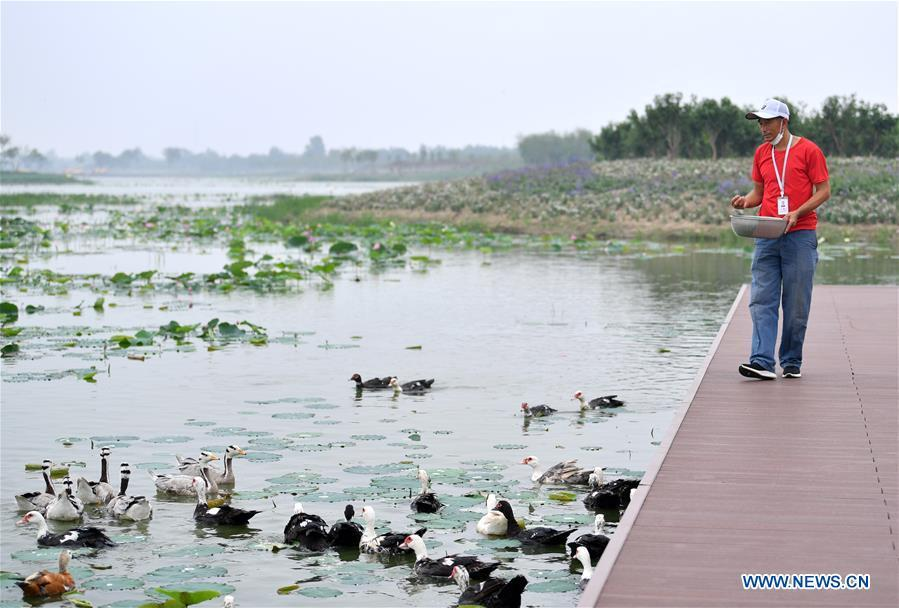 First phase of Shuguang Water Town project opens to public