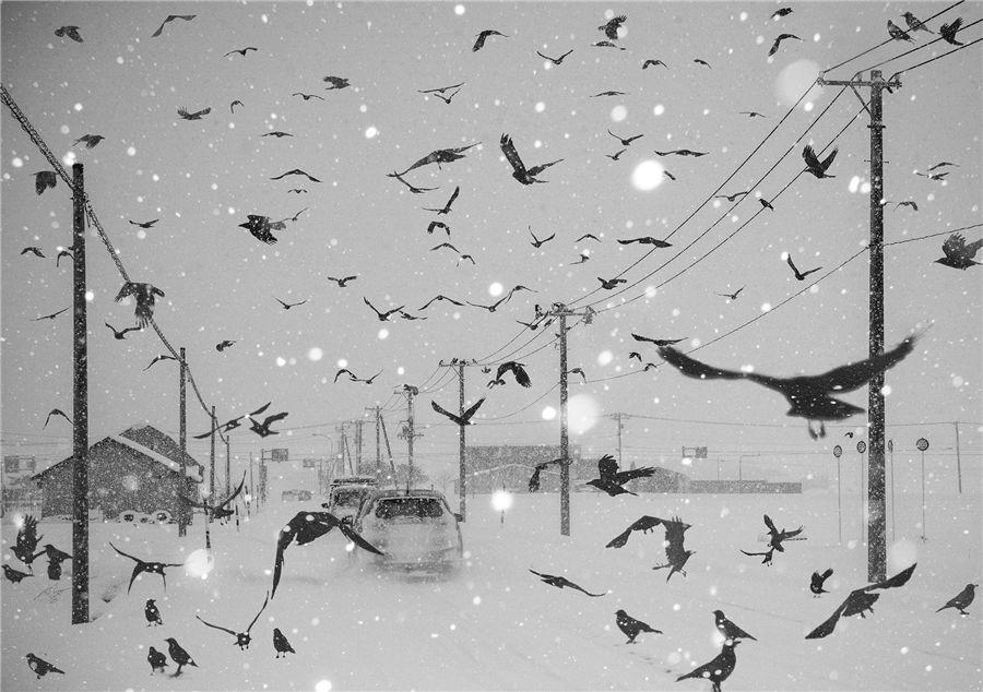 Photographer shows Hokkaido and crows through his lens