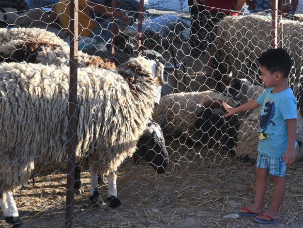 People visit livestock market ahead of Eid al-Adha in Tunis, Tunisia