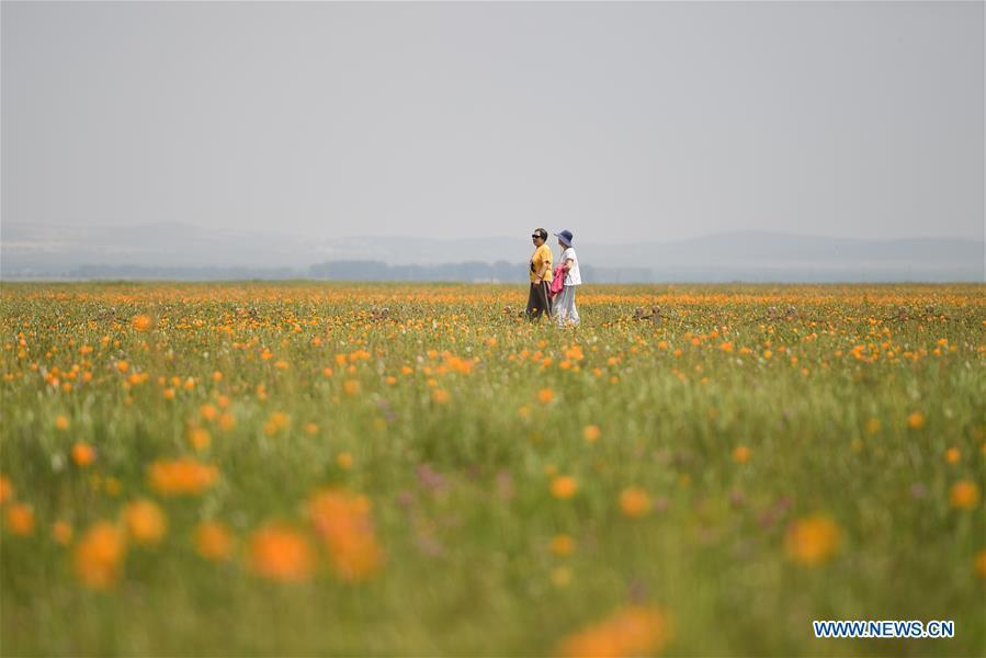 View of Jinlianchuan Pasture in Inner Mongolia