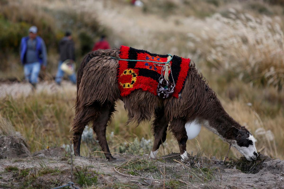 Antibodies from llamas fight virus