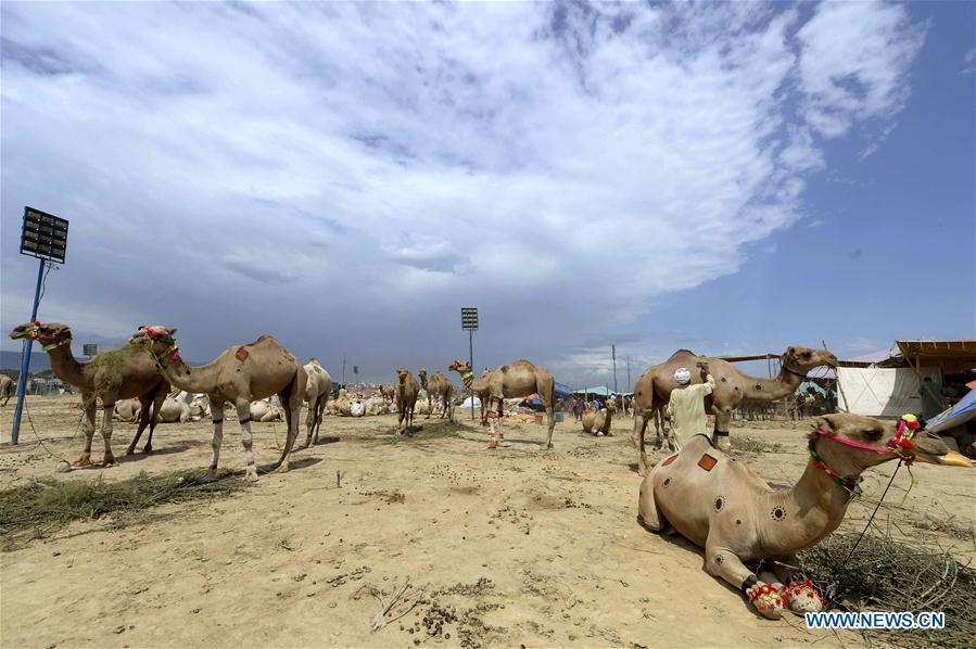 Trader decorates camel to attract customers at livestock market in Pakistan's Rawalpindi
