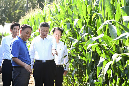 Xi says development of cooperatives adapt to local conditions