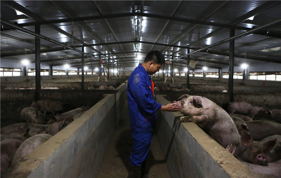 Global efforts sought to curb African swine fever