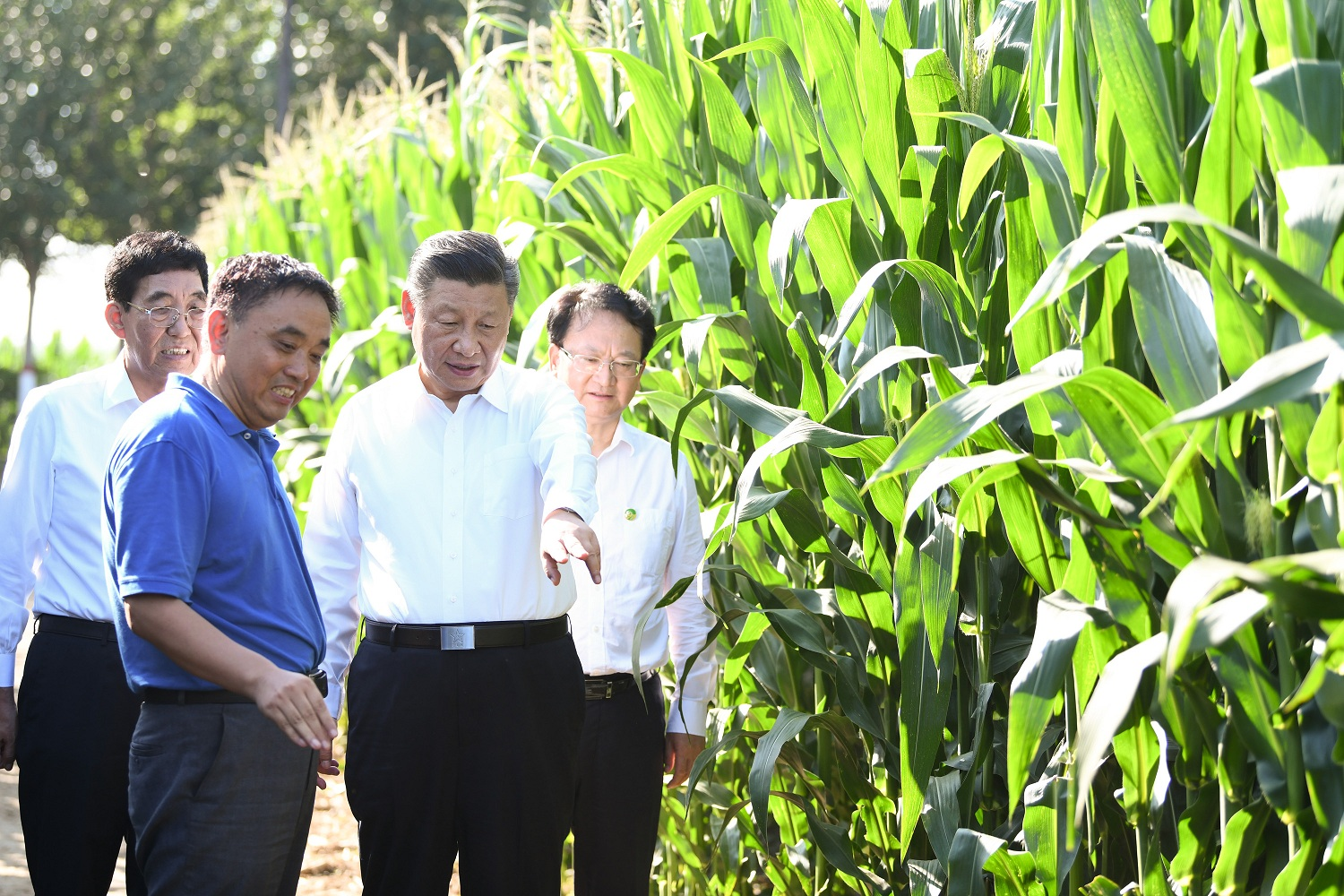 Xi & agriculture: President Xi Jinping inspects Northeast China's Jilin Province