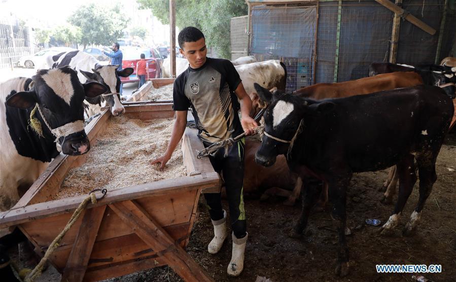 In pics: livestock market ahead of Eid al-Adha in Cairo, Egypt