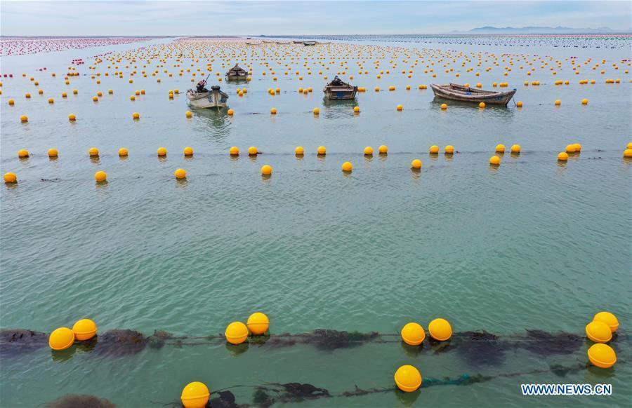 In pics: aquaculture floats at sea farm in Rongcheng, Shandong