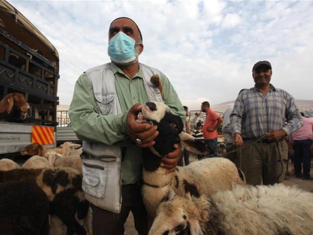 People visit livestock markets ahead of Eid al-Adha festival