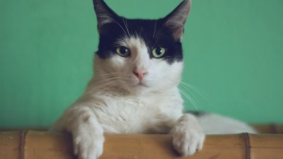 UK pet cat tests positive for COVID-19