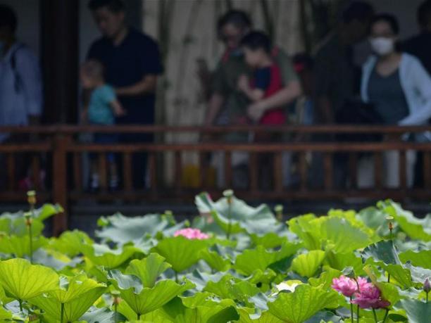 In pics: lotus flowers in Fuzhou, SE China