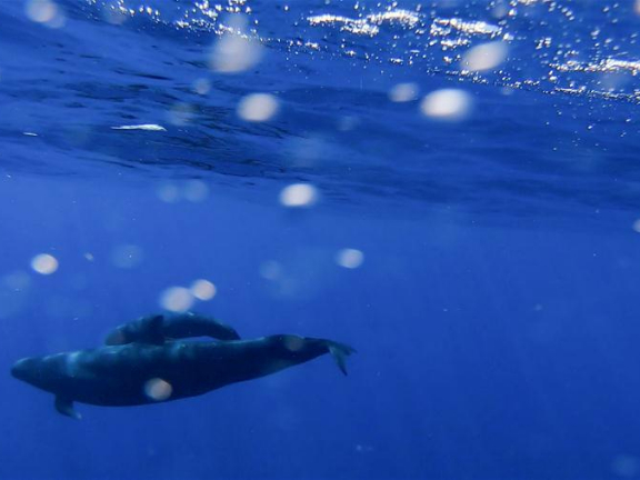 Chinese researchers spot 11 whale species during deep-sea expedition
