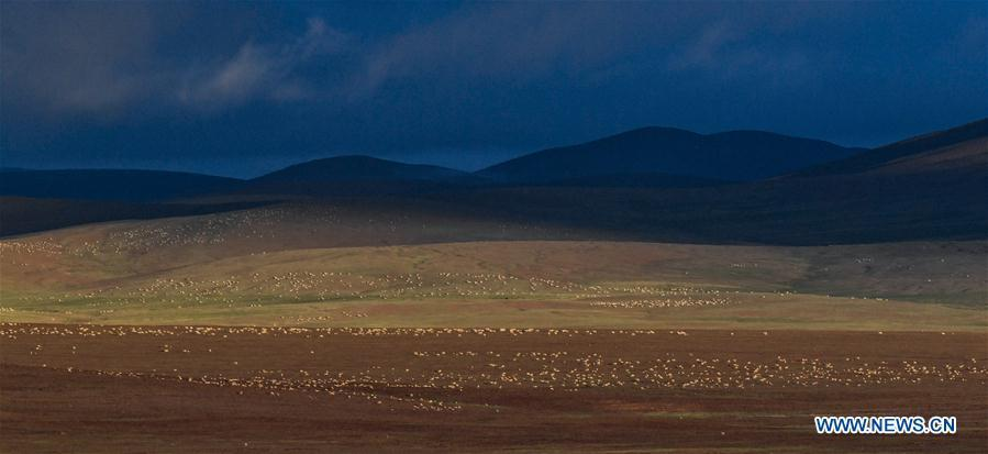 In pics: Tibetan antelopes near Zonag Lake in Hoh Xil, China's Qinghai