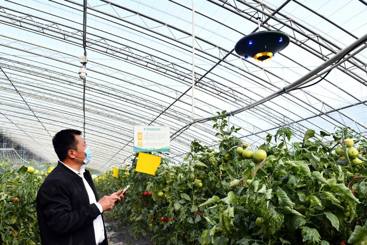 China Shouguang vegetable price index up 0.35%