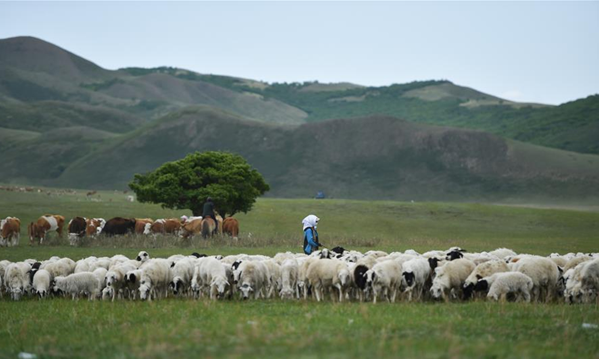 Mongolia to hand over first batch of 30,000 sheep to China