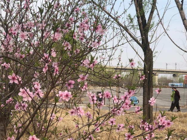 People visit parks in Beijing