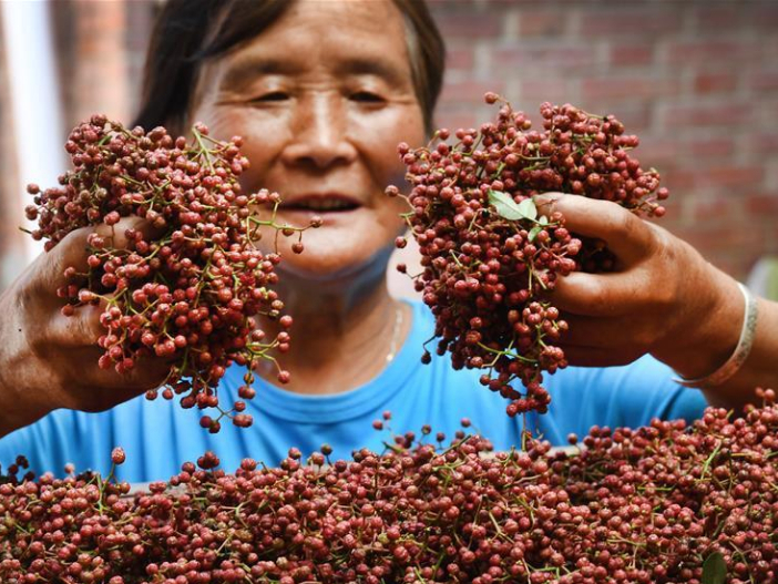 Prickly ash planting encouraged in Weinan