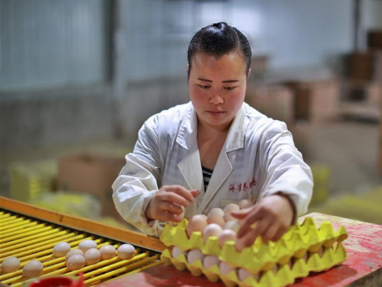 Haique Village in Guizhou develops homestay tourism, greenhouse mushroom cultivation to boost economy
