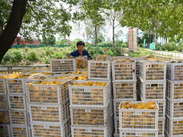 Donggang Village in Hubei continues to develop ecological agriculture
