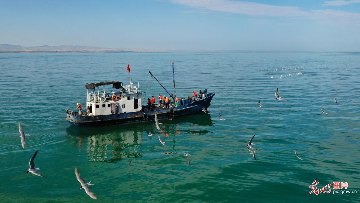 Fishermen fish in Bosten Lake, NW China's Xinjiang