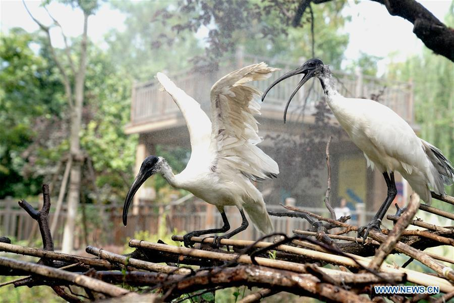 Animals at Shanghai Zoo cool off in hot weather