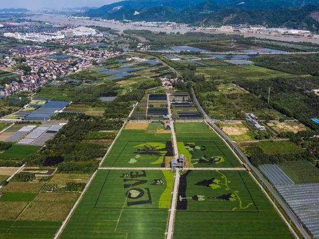 Rice paddy art becomes lightspot of local rural tourism in Hongqi Village of Hangzhou