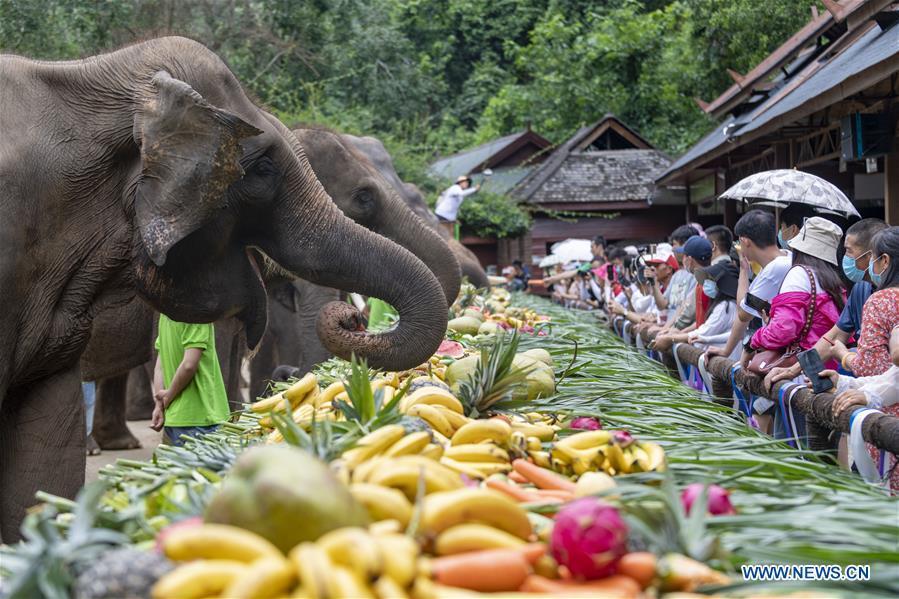China's Yunnan celebrates World Elephant Day