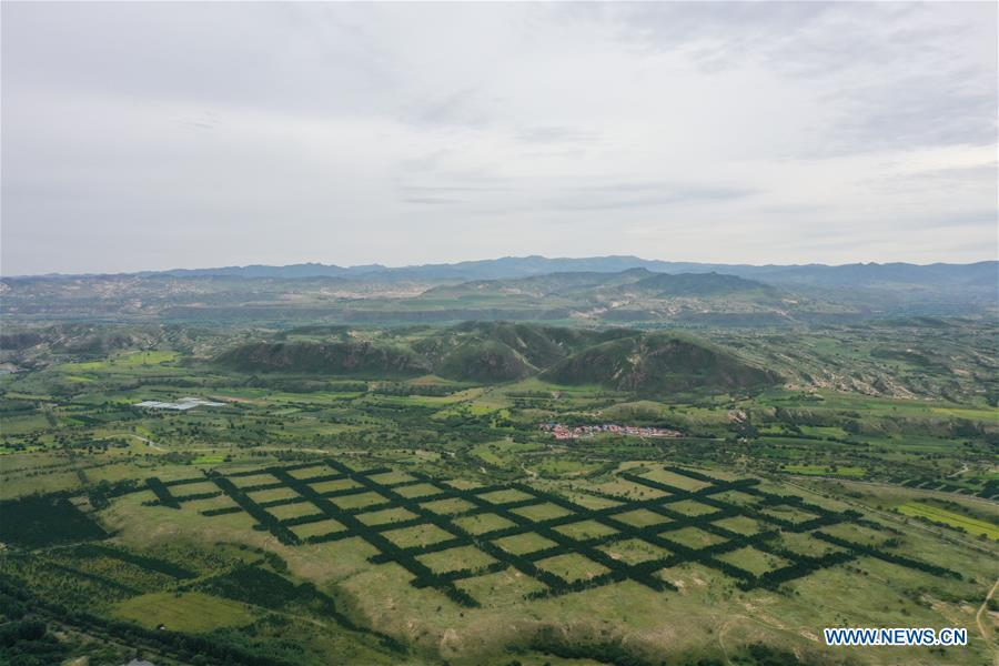 Progress made in desertification control work in China's Inner Mongolia