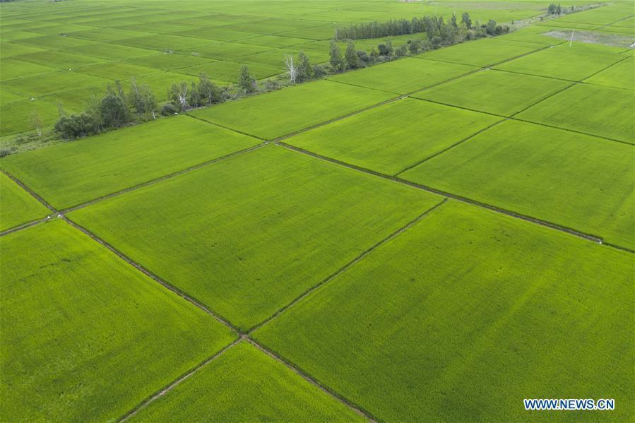 In pics: paddy fields in Fuyuan City, NE China