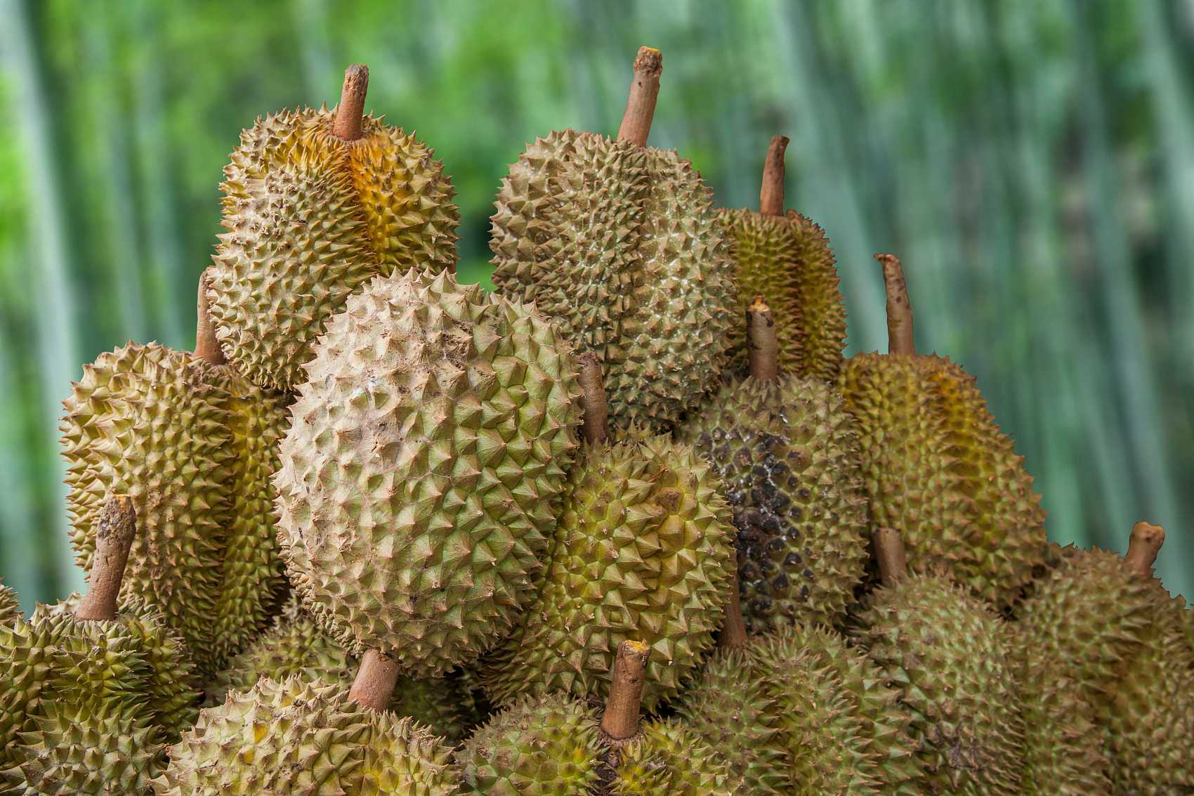 Thai durian export to Chinese mainland marks 73 percent of total export volume in this year's first half